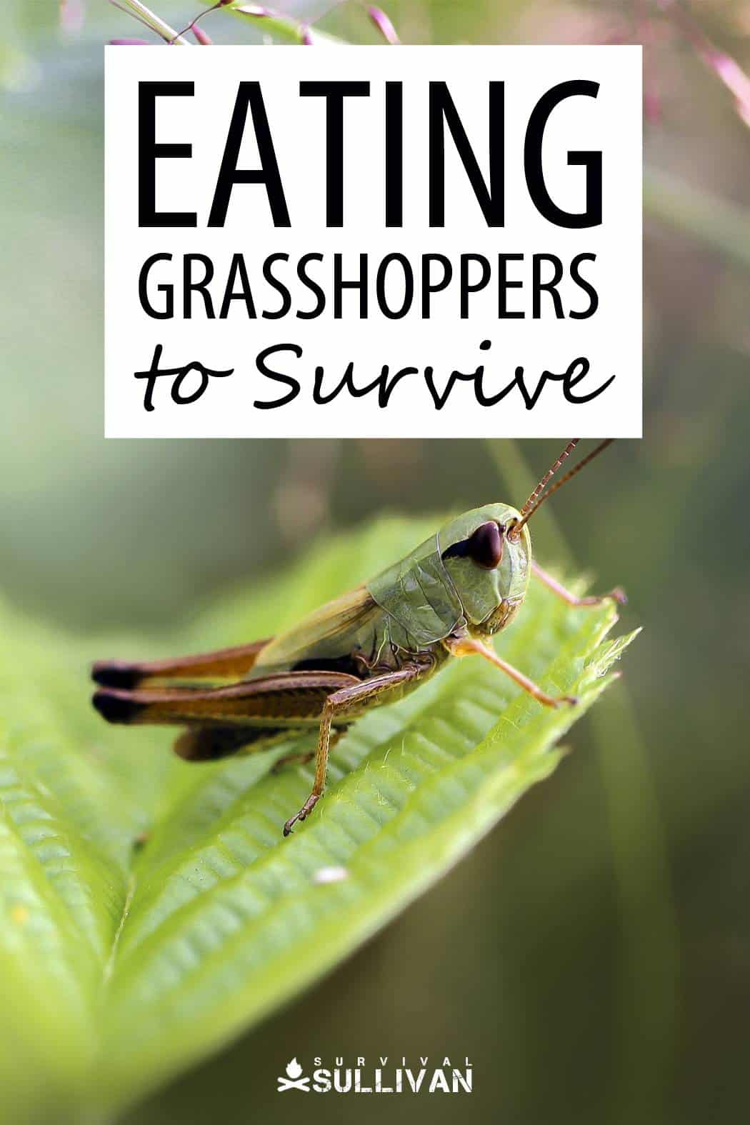 grasshoppers food pinterest