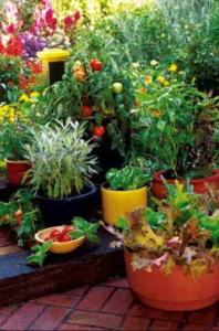 best potting mix for container vegetables